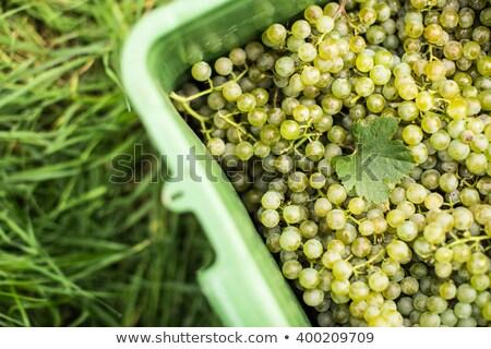 witte · wijn · druiven · plastic · vak · oogst · natuur - stockfoto © lightpoet