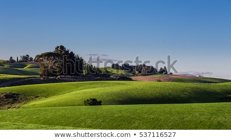 Rolling countryside in New Zealand Stock photo © backyardproductions
