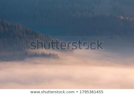 ősz erdő hegyek tájkép gyönyörű tarka Stock fotó © Kotenko