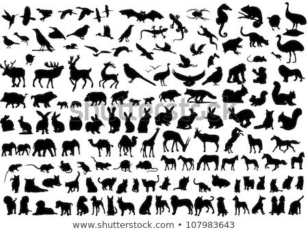 Herten dier silhouet hoog kwaliteit achtergrond Stockfoto © Krisdog