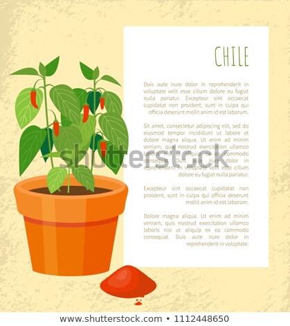 Şili poster bitki örnek metin başlık Stok fotoğraf © robuart