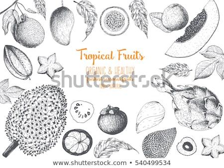 Mango posters ingesteld vector tekst monster Stockfoto © robuart