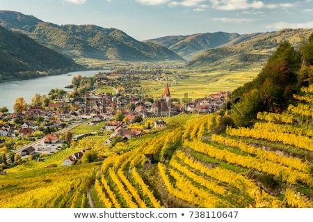 Áustria ver casa cidade verão verde Foto stock © borisb17