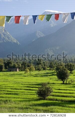 Preghiera bandiere himalaya top la Foto d'archivio © dmitry_rukhlenko