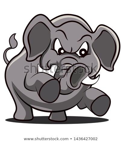 Afrikaanse olifant woede agressie afrika witte dier Stockfoto © fouroaks