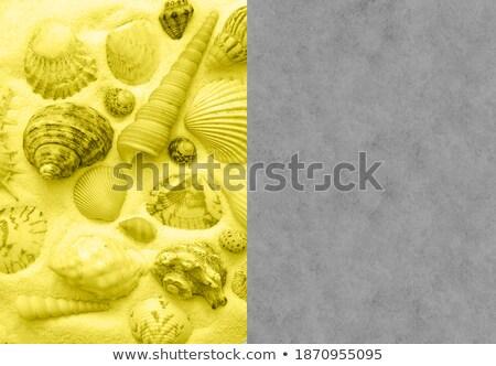 yellow illuminated seashell Stock photo © prill
