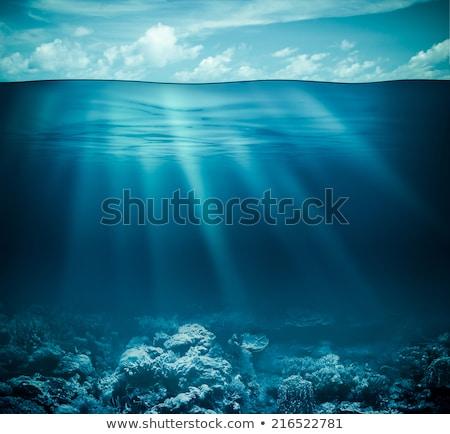 Vízalatti élet tengeralattjáró napfény hatás víz Stock fotó © ajlber