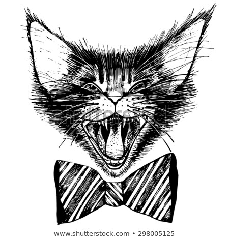 aggressive maine coon cat Stock photo © cynoclub