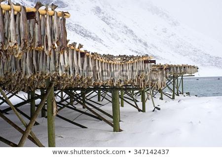 hal · Portugália · tengerpart · étel · természet · halászat - stock fotó © dinozzaver