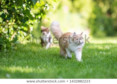 Kat tuin jonge klim tak katten Stockfoto © MKucova