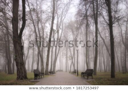 Kifejezéstelen park pad ősz fény levél Stock fotó © mikdam