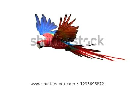 красный морем искусства океана птица Перу Сток-фото © tungphoto