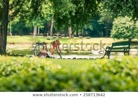 verão · parque · bicicleta · bicicleta · caminho · céu - foto stock © fotoyou