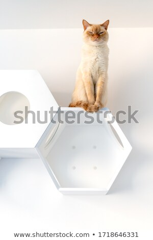 Thai chat séance maison stock photo Photo stock © punsayaporn