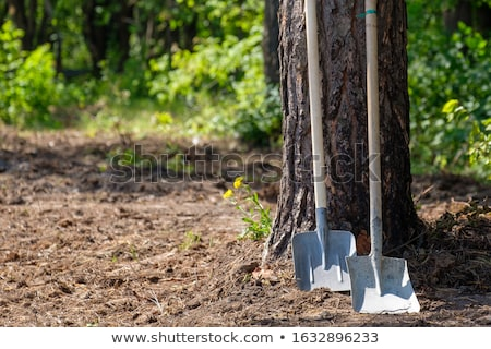 Two shovels Stock photo © bluering