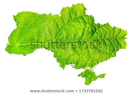 Ukraine environmental map Stock photo © speedfighter