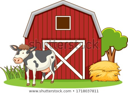 Cows live on the farmyard Stock photo © bluering