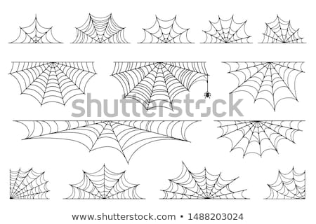 Halloween Spider Design Element Stock photo © Lightsource