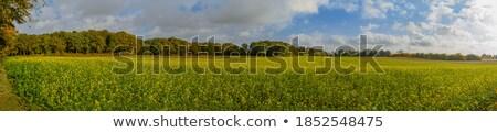 мнение красивой горчица области небе Сток-фото © wavebreak_media