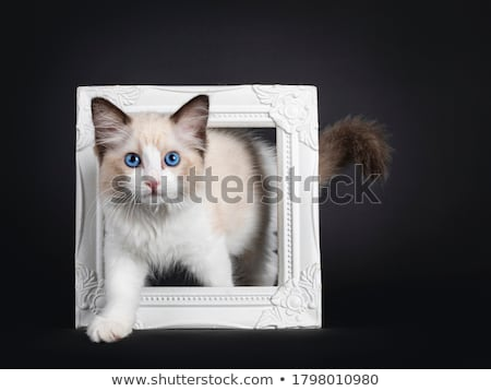 macska · kép · piros · baba · kék · macskák - stock fotó © catchyimages