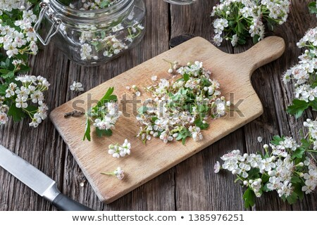 Cutting up hawthorn flowers to prepare tincture Stock photo © madeleine_steinbach