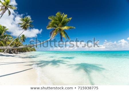 Foto d'archivio: Spiaggia · tropicale · palme · francese · polinesia · viaggio · paesaggio · marino