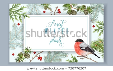 Winter sale background with bullfinch Stock photo © Artspace