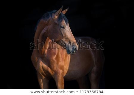Paard witte natuur seizoen plantkunde Stockfoto © dolgachov