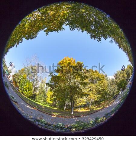 chêne · vieux · sud · chêne · arbres · espagnol - photo stock © lianem