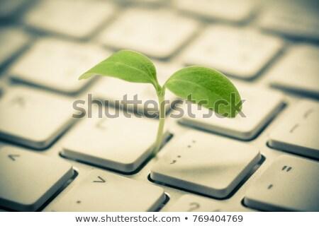 Stock fotó: öko · billentyűzet · zöld · újrahasznosítás · internet · munka