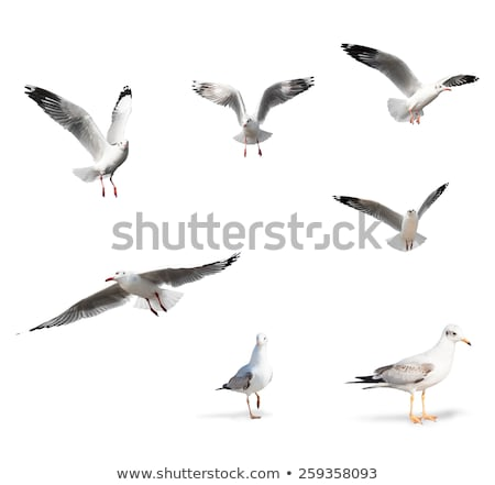 collection of isolated gulls stock photo © taviphoto
