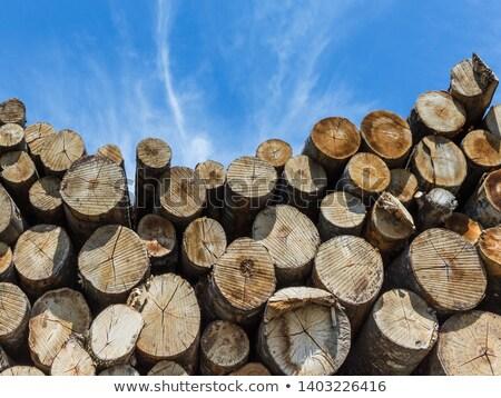 kereste · yukarı · gökyüzü · ağaçlar · ağaç · ahşap - stok fotoğraf © tainasohlman
