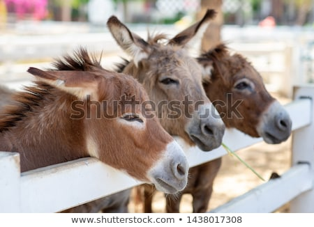 horses and donkeys on pasture Stock photo © goce