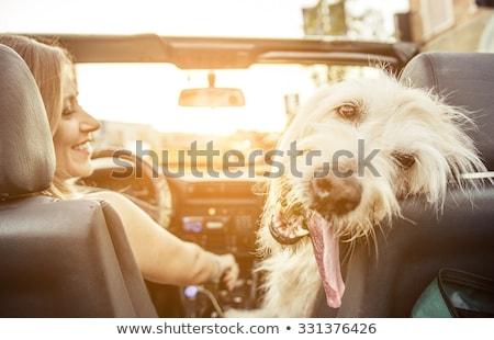 mulher · cão · carro · verão · viajar - foto stock © hasloo