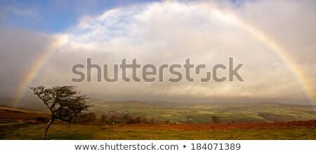 Dartmoor in the rain Stock photo © Hofmeester
