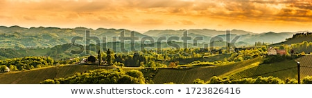 Toskania w. domu drzewo wiosną krajobraz Zdjęcia stock © LianeM