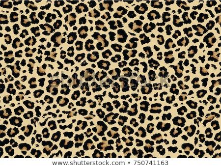 Leopard wydruku młodych rumuński kobieta Zdjęcia stock © disorderly