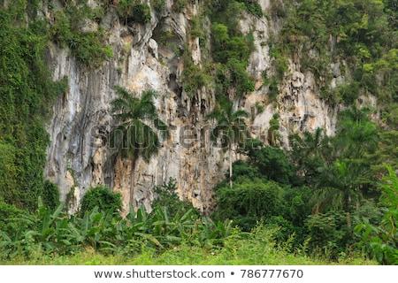 Etrafında vadi Küba tropikal sahne ada Stok fotoğraf © prill