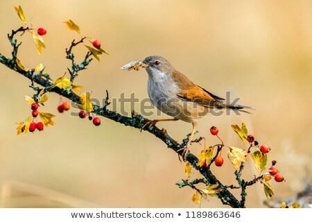 jardim · sessão · ramo · paisagem · pena · animal - foto stock © Rosemarie_Kappler