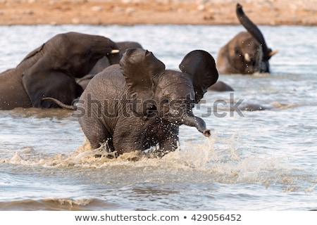 fiatal · afrikai · elefántok · játszik · játék · tartalék - stock fotó © simoneeman