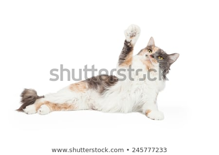 Cat with arms outstretched Stock photo © bennerdesign