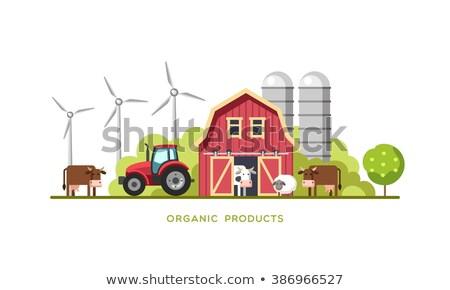 Koe schapen boerderij scène natuur land Stockfoto © makyzz