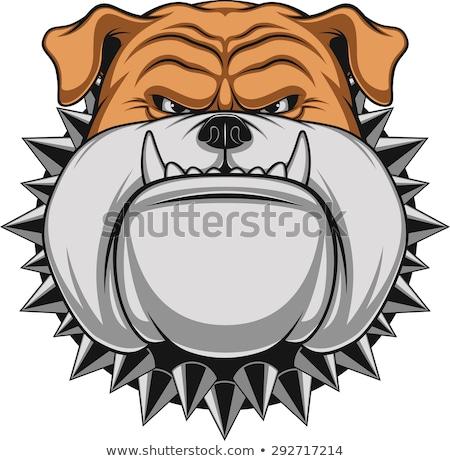 Bulldog Dog Breed Cartoon Retro Drawing Stock photo © patrimonio