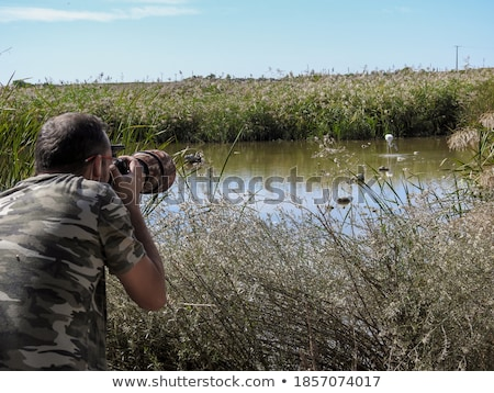 Photographer photographs flamingo in nature Stock photo © barsrsind