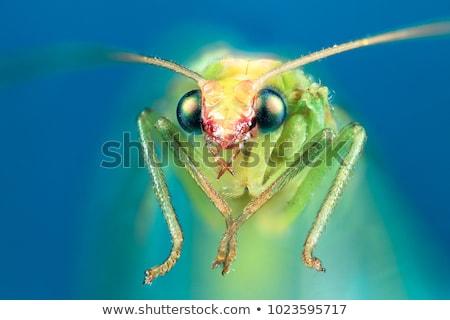 iridescent bug in close up Stock photo © gewoldi