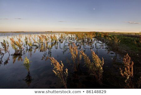 Sécher saskatchewan Canada coucher du soleil nature paysage Photo stock © pictureguy