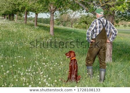 vadászkutya · fegyver · kutya · kint · egy · kívül - stock fotó © phbcz