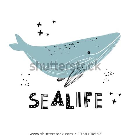 Sealife Stock photo © ajlber