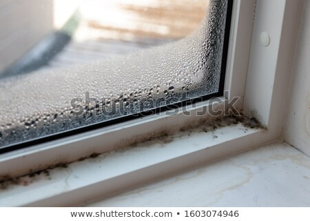 rotten window Stock photo © prill