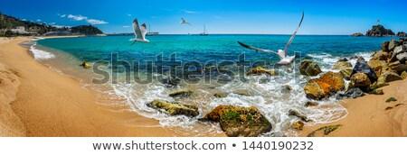 Panorama view of Blanes seaside and Sa Palomera rock Stock photo © oneo